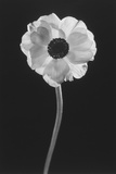 Flower Photographic Print by Graeme Harris