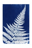 Fern, 2013 Giclee Print by Elspeth Ross
