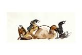 Rolling Horse (Przewalski), 2013 Giclee Print by Mark Adlington