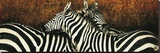 Two Zebras Stretched Canvas Print by Fabienne Arietti