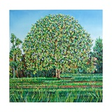 Bow Tree Spring Giclee Print by Noel Paine