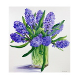 Blue Hyacinths Giclee Print by Christopher Ryland