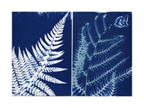 Fern and Bracken, 2013 Giclee Print by Elspeth Ross