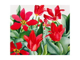 Shakespeare Tulips Giclee Print by Christopher Ryland