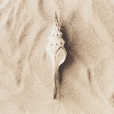 Sea Shell on Sand Photographic Print by Graeme Harris