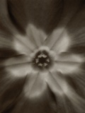 Flower Photographic Print by Graeme Harris