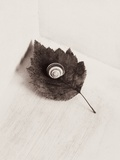 Seashell and Leaf Photographic Print by Graeme Harris