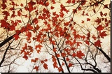 Bare Branches and Red Maple Leaves Stretched Canvas Print