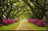 Smuk sti kantet med træer og lilla azaleaer Opspændt lærredstryk