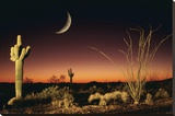 Arizona-Ocotillo And Saguaro Stretched Canvas Print