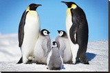 Penguins-Family Stretched Canvas Print