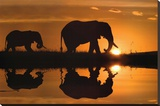 Jim Zuckerman African Silhouette Elephants Art Print Poster Stretched Canvas Print