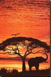 Afrika'da Günbatımı - Şasili Gerilmiş Tuvale Reprodüksiyon