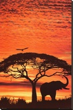 African Sunset Stretched Canvas Print