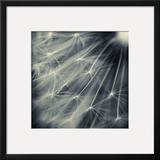 Search for Light Framed Giclee Print by Ursula Abresch