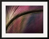 Sunset Framed Giclee Print by Ursula Abresch