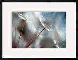 September Framed Photographic Print by Ursula Abresch