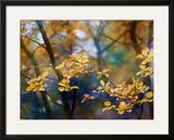 Autumn Leaves Framed Giclee Print by Ursula Abresch