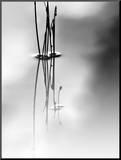 Silence Mounted Print by Ursula Abresch