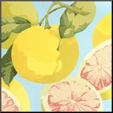 Fresh Grapefruits Mounted Print by Martha Negley