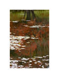 Lily Pads and Red Maple Giclee Print by Michael Hudson