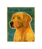 Golden Retriever Giclee Print by John Golden