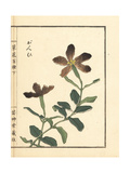 Ganpi or Catchfly, Lychnis Species Giclee Print by Bairei Kono