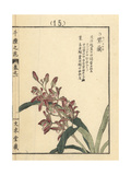 Chinese Ground Orchid, Bletilla Striata Giclee Print by Bairei Kono