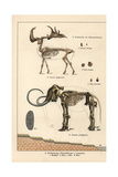 Fossil Skeletons of Great Irish Deer and Woolly Mammoth Giclee Print