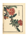 Zakuro or Pomegranate Flower, Punica Granatum Giclee Print by Bairei Kono