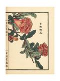 Zakuro or Pomegranate Flower, Punica Granatum Giclee Print by Bairei Kono
