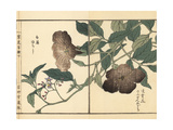 Chinese Trumpet Vine and Lyreleaf Nightshade Giclee Print by Bairei Kono