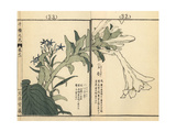 Japanese Bluestar, Amsonia Elliptica, and Plantain Lily Giclee Print by Bairei Kono