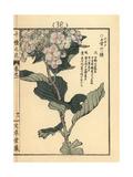 Bigleaf Hydrangea, Hydrangea Macrophylla Giclee Print by Bairei Kono