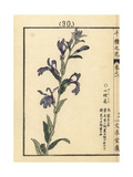 Sawakigyou, Lobelia Sessilifolia Giclee Print by Bairei Kono