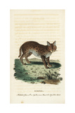 Serval Cat, Leptailurus Serval Giclee Print