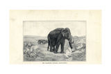 Mammoth, Mammuthus Primigenius Giclee Print by Charles R. Knight