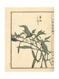 Tougarashi or Chili Pepper, Capsicum Annuum Reproduction procédé giclée par Bairei Kono