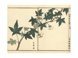 Shina Ichigo or Korean Strawberry, Fragaria Ananassa Giclee Print by Bairei Kono
