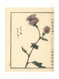 Yamagobou or Oyamabokuchi, Synurus Pungens Giclee Print by Bairei Kono
