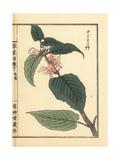 Odorikosou or White Nettle, Lamium Barbatum Giclee Print by Bairei Kono