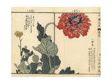 Opium Poppy and Thunberg's Fleabane Giclee Print by Bairei Kono