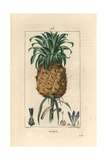 Pineapple Fruit, Ananas Comosus Giclee Print by Pierre Turpin