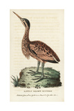 Little Bittern, Ixobrychus Minutus Reproduction procédé giclée par George Edwards