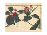 Utsugi or Crenate Deutzia, Deutzia Crenata Giclee Print by Bairei Kono