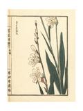 Rerii Narukisu or Daffodil Variety, Narcissus Species Giclee Print by Bairei Kono