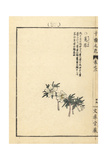 Winterstern, Shibateranthis Pinnatifida Giclee Print by Bairei Kono