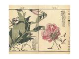 Japanese Lily, Lilium Speciosum, and Japanese Gentian Giclee Print by Bairei Kono