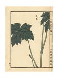 Asian Globeflower, Trollius Asiaticus Giclee Print by Bairei Kono
