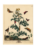 Cinnabar Moth, Cream Spot Tiger Moth, and Eyed Hawkmoth Giclee Print by Moses Harris